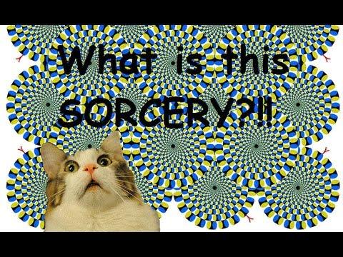 Cat VS an Optical Illusion!