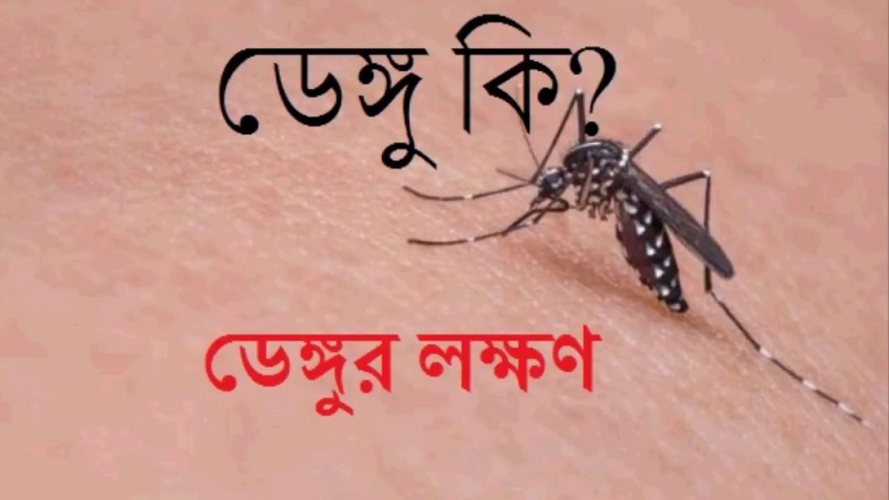 what is Dengue fever bangla, what is dengu jar bangal