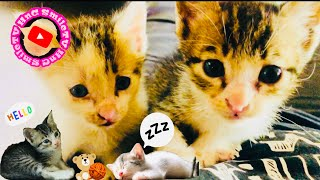 CATS | Funny and Cute video COMPILATIONS 2020 |My KURO and SHIRO| HnC Smile TV