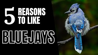 5 Good Reasons To Like Blue Jays