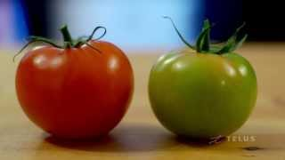 EATS Calgary: Unexpected Harvest, Benefits of Tomatoes from Dietitian Vincci Tsui