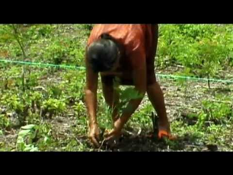 Limay Community Carbon Project in San Juan de Limay, Nicaragua