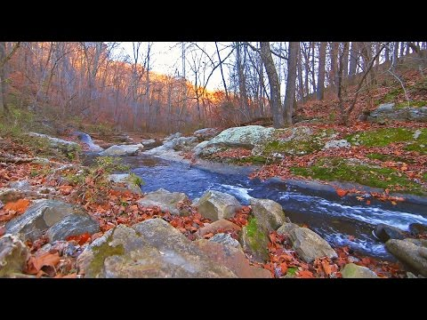 River's Edge: Nature Walk & Talk [ASMR] [Binaural] [DJI Osmo]