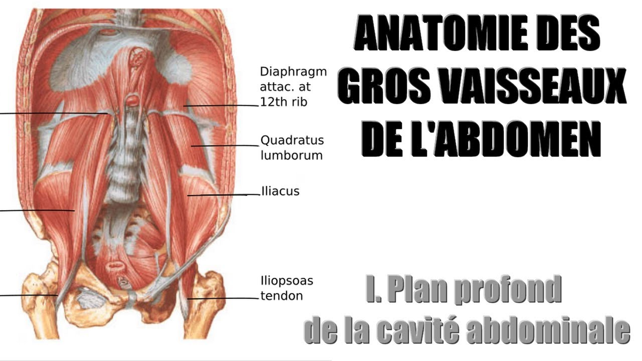 Charmant Anatomie Abdomin Zeitgenössisch - Anatomie Ideen - finotti.info