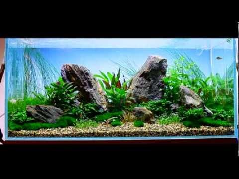 Nature Aquarium At 3 Weeks