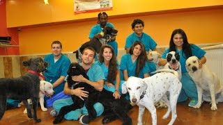 Dog Grooming - Pet Boarding - Dog Training - Ft. Lauderdale