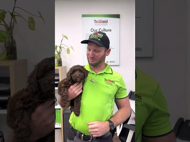 Trusted Pest is hiring in Brisbane , Australia
