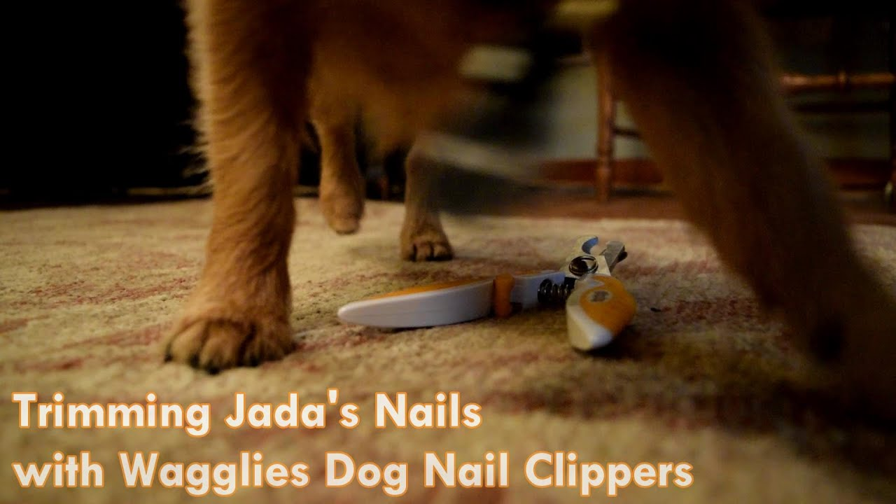 Trimming your Dog\'s Nails with Wagglies Dog Nail Clippers (Sponsored ...