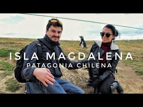 MILLONES DE PINGÜINOS - CONOCE ISLA MAGDALENA