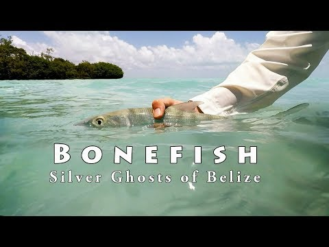 Bonefishing On The Fly In Ambergris Caye, Belize