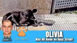 Hope Rescues Abandoned Olivia From Busy Street - @Viktor Larkhill Extreme Rescue