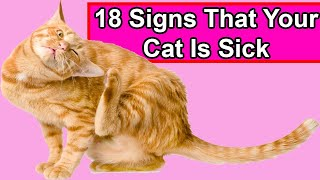 18 Signs That Your Cat is Sick