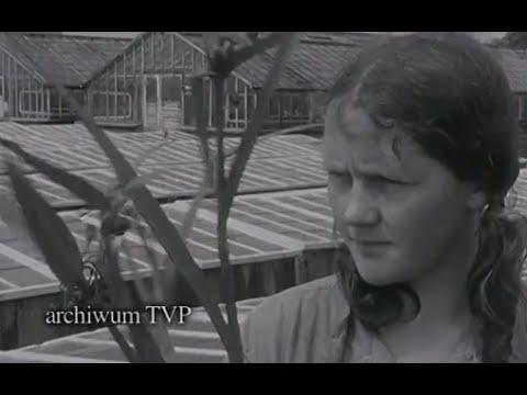 1988 www.Bogucin.pl Wielkie napady PRL-u Napad w Bogucinie