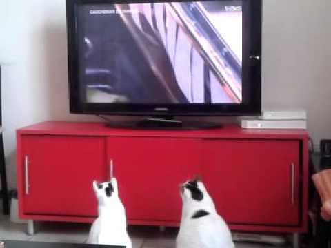 Mes chats aiment gordon ramsay de cauchemar en cuisine - Cauchemar en cuisine gordon ramsay video ...