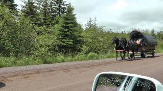 Horse And Wagon Trip