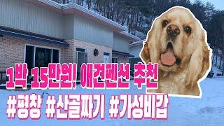 [여행vlog] 가성비갑!! 평창 '레오네 애견…