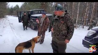Охота с русской гончей по первому снегу .