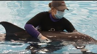 Emily the Ocean Girl visits the Texas Marine Mammal Rescue Network