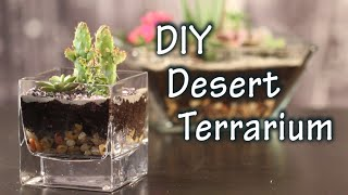 Diy Tutorial On How To Make A Terrarium With Cacti And Desert Plants