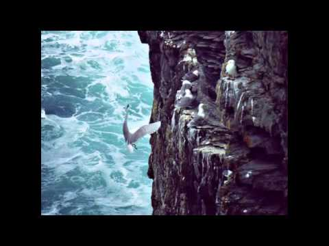 Song For The Antrim Coast BY  Greeley's Reel