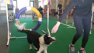 2020 Westminsters Dog Show Preview featuring Past Agility Winners, Border Collies, Very and Fame