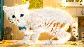 ПРИКЛЮЧЕНИЕ МАЛЕНЬКОГО КОТЕНКА / Мультик про котика для детей / Подарок конфет #ПУРУМЧАТА