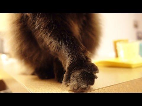 しおちゃん遠慮気味に挙手? Theo the cat modestly raises his hand