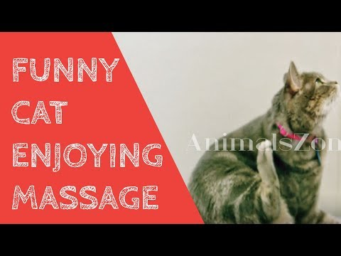 The best pets of  the month|Cat Knocking Things|Funny Cats Acting Like Humans|Funny Cat Compilation|