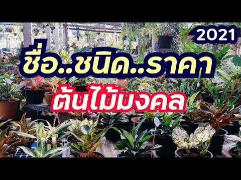 ราคาต้นไม้มงคล ว่านมงคล (16/3/2021)/นานาพันธุ์ไม้byนิตยา