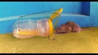 homemade bottle mouse rat trap supper mouse trap that works 100