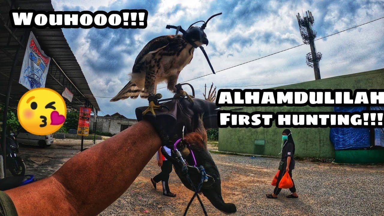 Crested Goshawk Hunting Youtube