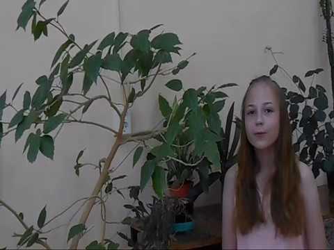 Изображение предпросмотра прочтения – ЛюдмилаВолкова читает произведение «Ещё майская ночь» А.А.Фета