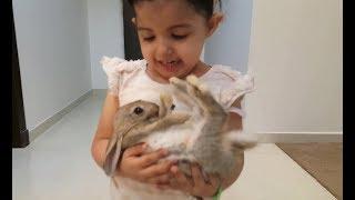 شرينا أرنب صغير | واميرة وميادة يربونهم