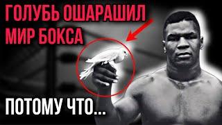 Чернокожий хулиган стал чемпионом мира по боксу с помощью грязного уличного голубя. Как так вышло