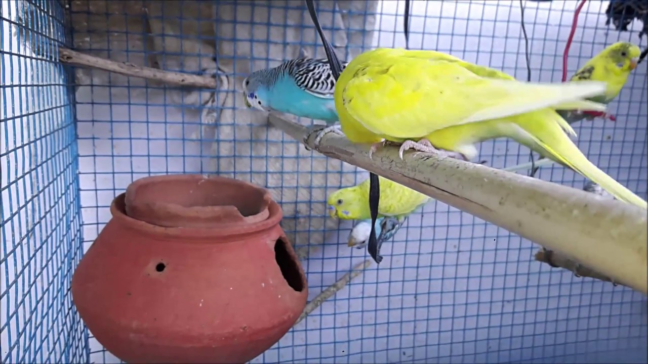 Love Birds Cage With Pot