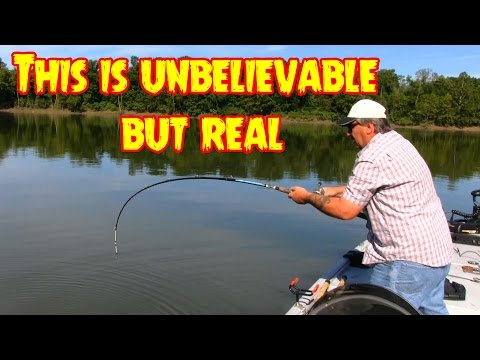Video Huge catfish pictures