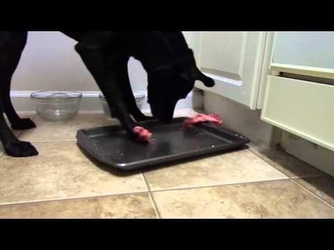 Raw feeding dog, beef ribs