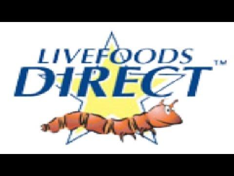 livefoods direct review where i buy my livefood youtube. Black Bedroom Furniture Sets. Home Design Ideas