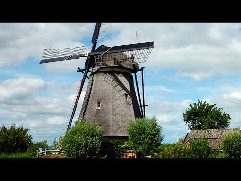 Windmill and Tulip Day Trip, Amsterdam