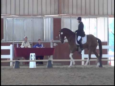 Hackney Horse Koopman's Rumba & Alice Simpson, Shelley Siegel Dressage 2015 2nd Level Test 3
