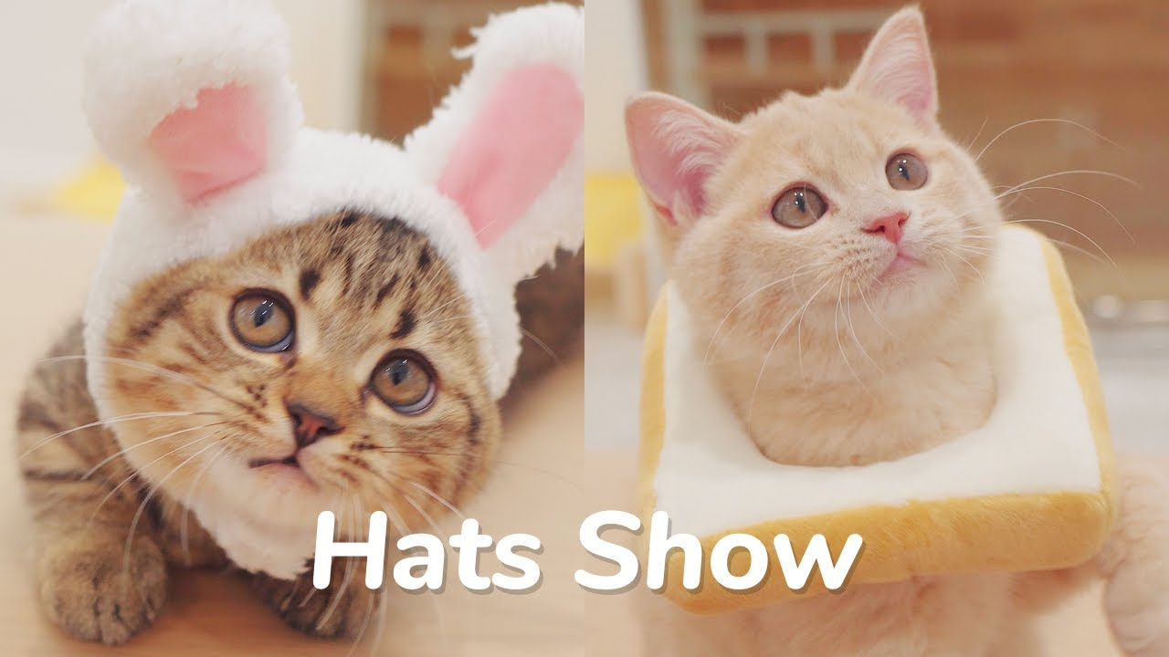 Cat Hats Show! Bunny, Piggy, Frog, Toast, and MORE! - Day 80 @ Kittens Day 1 to Day 100 Lucky Paws