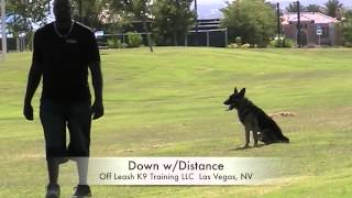 "German Shepherd ""egon"" Board And Train Program Before And After; Las Vegas Dog Trainers"