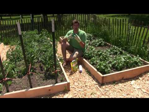 Using Diatomaceous Earth In the Garden What Is It & How to Use It