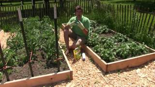 Using Diatomaceous Earth In the Garden - What Is It & How to Use It
