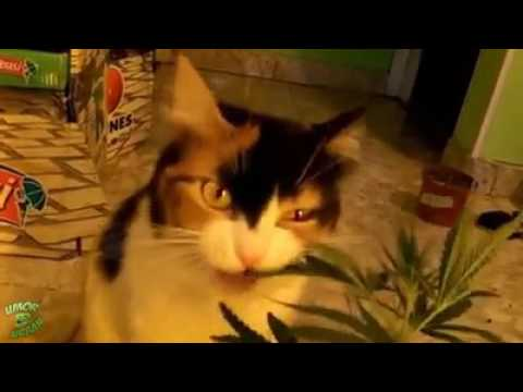 смешное короткое видео Холодное сердце - YouTube
