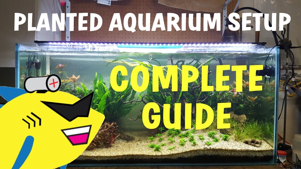 planted aquarium setup complete guide to a soil planted tank youtube