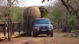 funny vidos of animals