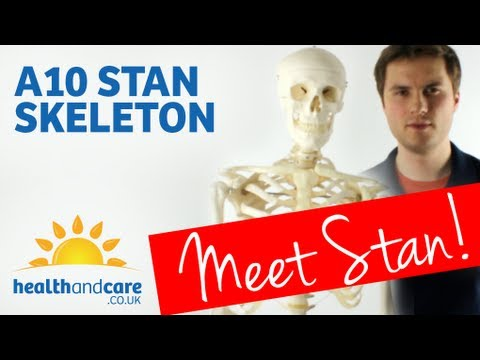 Model Skeleton Stan A10 Full Size Human Skeleton Model