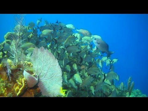Cayman Islands - Little Cayman Beach Resort  | Scuba Diving, Little Cayman, Part 4