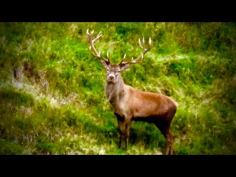Hunting Red deer in New Zealand part 122